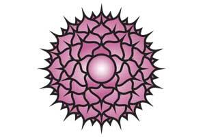 Crown Chakra aka Sahasrara: Body Anatomy